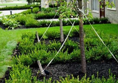 Chester Street Residence trees with stakes