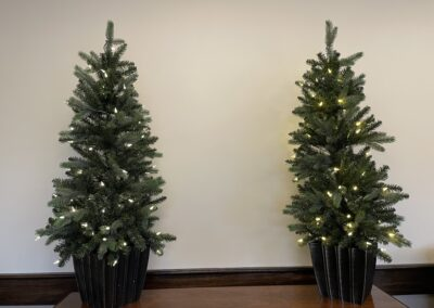 small evergreen trees with white lights